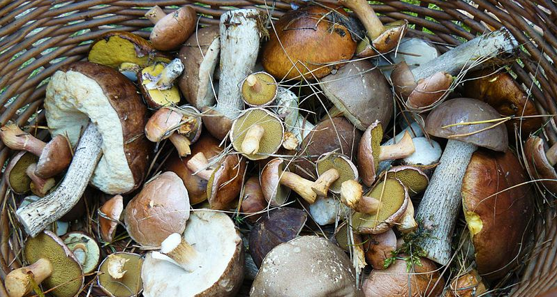 a basket full of wild mushrooms