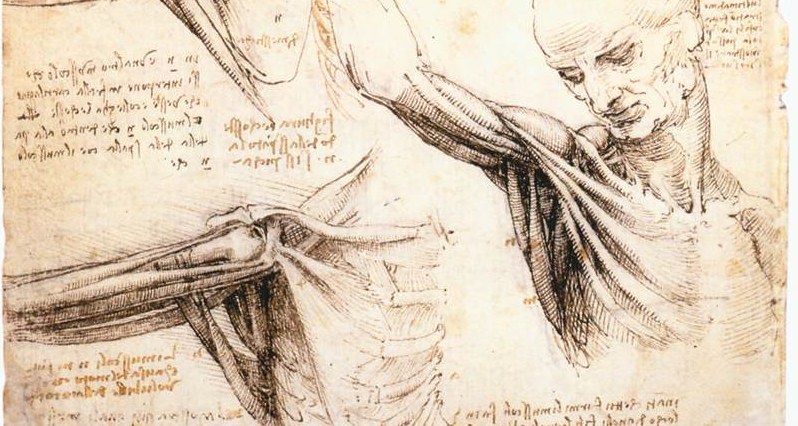 anatomical study of the shoulder Leonardo DaVinci
