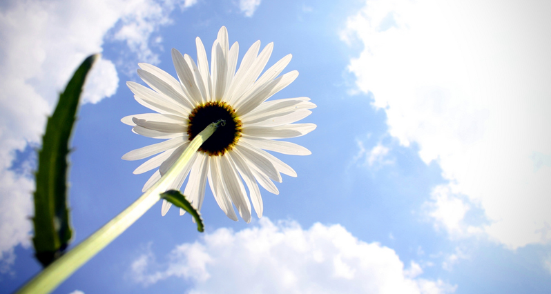 a flower in sunlight