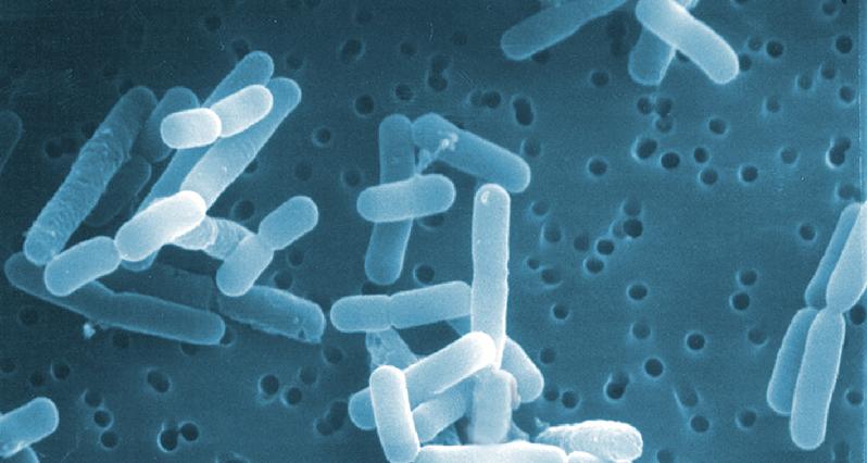 probiotics under a microscope