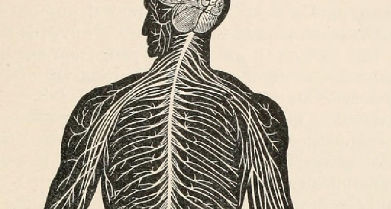 woodblock print of nervous system